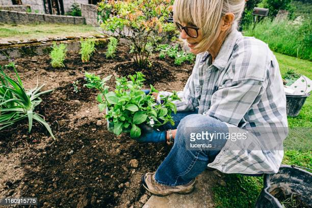 healthy plants and good soil just need sun and water - gardening stock pictures, royalty-free photos & images