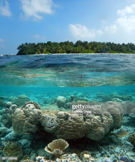 Healthy Porites Corals And White Sand Beach