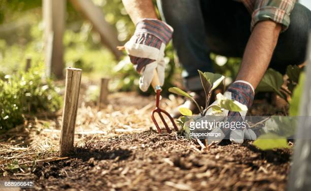 healthy soil is the key to feeding the world - organic farm stock pictures, royalty-free photos & images
