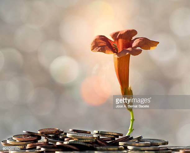 Heap of coins on which there is born a flower, concept of the end of a financial crisis