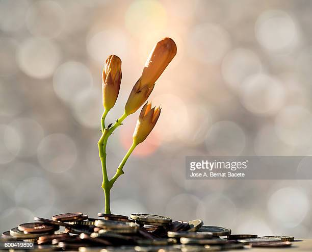 Heap of coins on which there is born a plant, concept of the end of a financial crisis