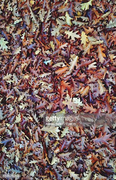 Heap Of Dry Leaves