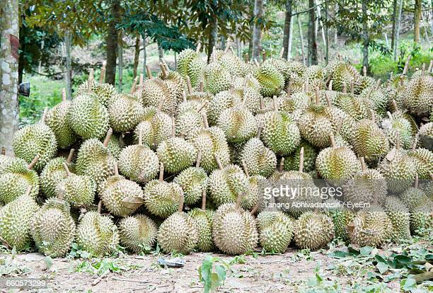 Heap Of Durians On Ground