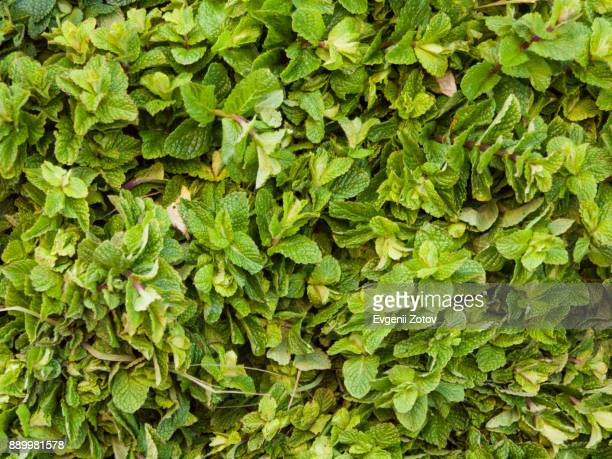 Heap of fresh mint for sale on market in Marrakesh, Morocco