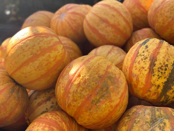 heap of fresh yellow & orange striped hybrid carnival or sweet dumpling squash