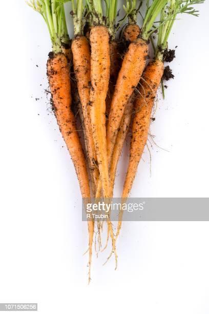 heap of freshly picked carrots isolated on white - parte della pianta foto e immagini stock
