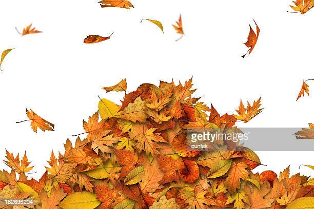 heap of leaves - heap stock pictures, royalty-free photos & images