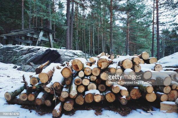 Heap Of Logs On Snow Covered Field In Forest