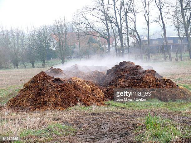 heap of manure on field against trees - excremento fotografías e imágenes de stock