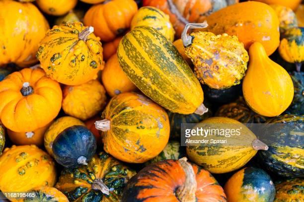 heap of various pumpkins - gartenkürbis stock-fotos und bilder