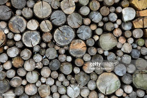 Heap Of Wooden Logs at Görlitz, Germany