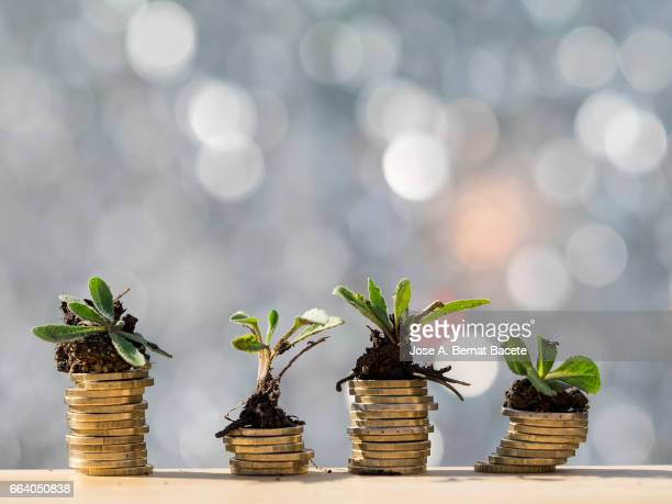 heaps of coins of euro with green natural plants it they are born, illuminated by the light of the sun - ganar dinero fotografías e imágenes de stock
