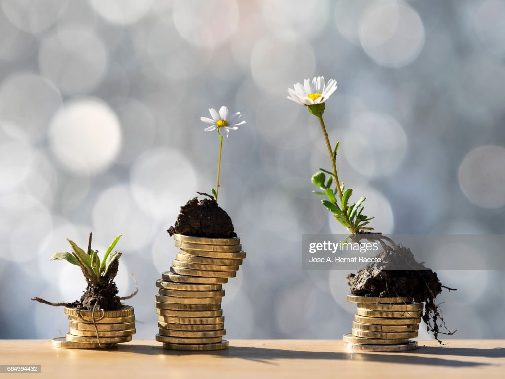 Heaps of coins of Euro with green natural plants it they are born, illuminated by the light of the sun : Stock Photo