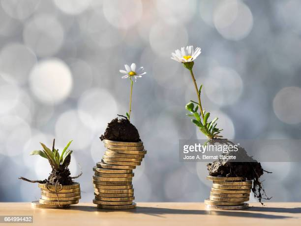 heaps of coins of euro with green natural plants it they are born, illuminated by the light of the sun - geld verdienen stock-fotos und bilder