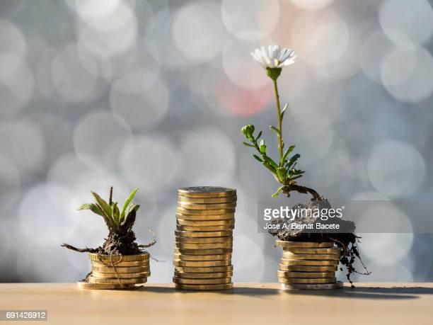 Heaps of coins of Euro with green natural plants it they are born, illuminated by the light of the sun