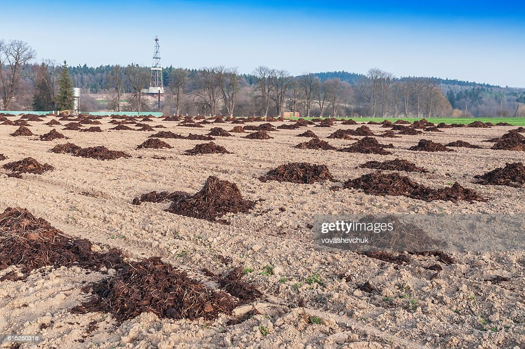heaps of manure : Foto de stock