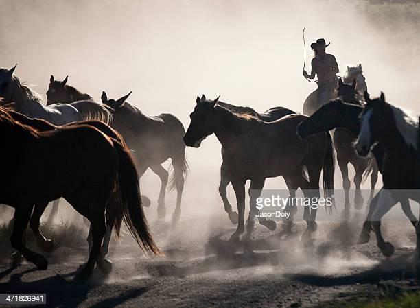 Hearding Horses on a Ranch