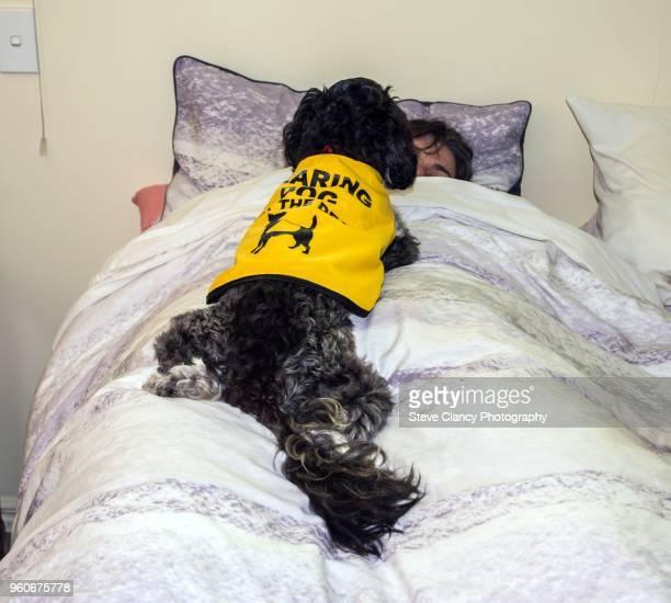 hearing dog - servicehund stock-fotos und bilder