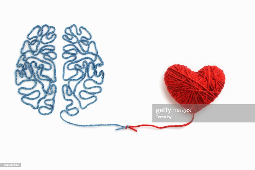 Heart and brain connected by a knot on a white background : Stock Photo