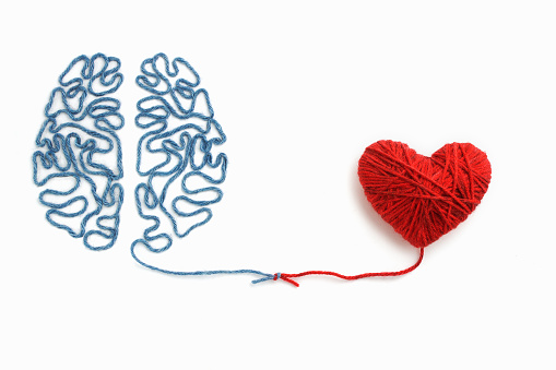 Heart and brain connected by a knot on a white background 896352582