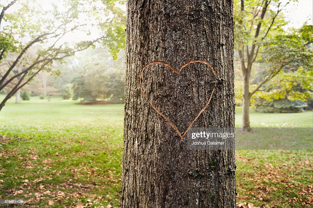 A heart carved in a tree : Stock Photo