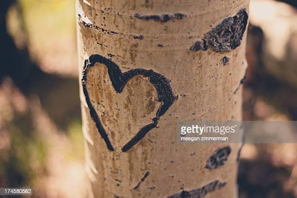 heart carved in aspen tree