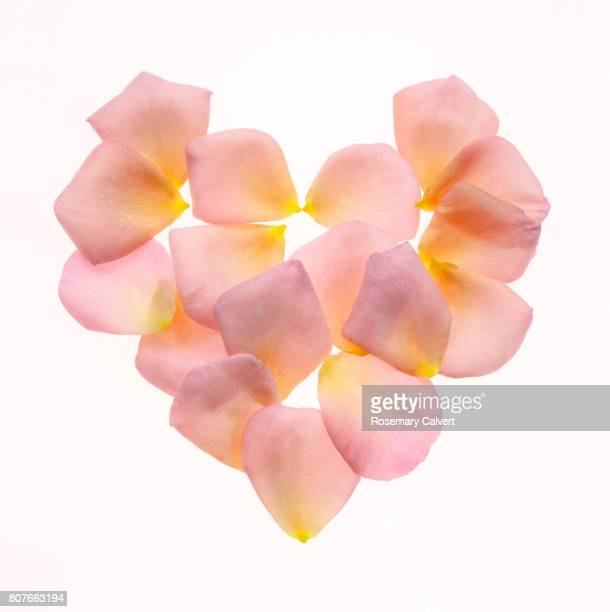 Heart created with soft pink petals on white.