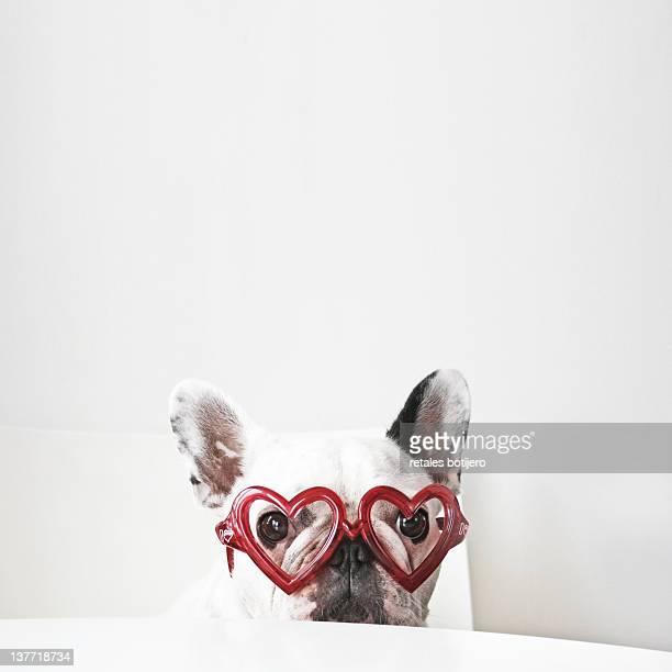 Heart glasses and white dog