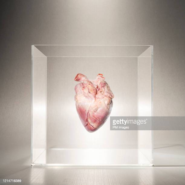 heart in a box - heart internal organ stock pictures, royalty-free photos & images