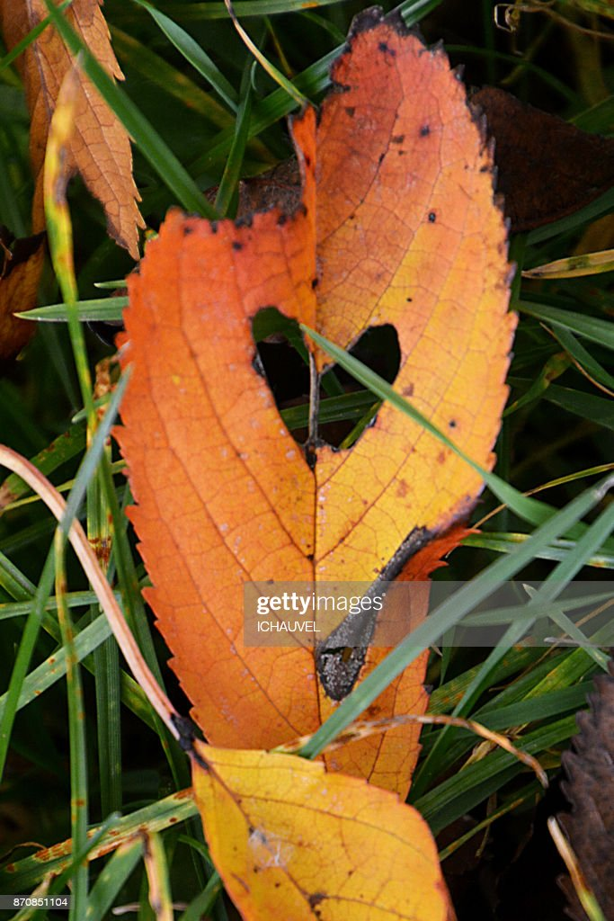 heart in a leaf France : Stock Photo