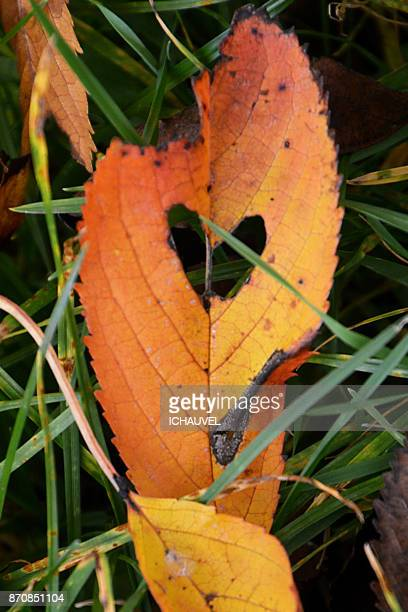 heart in a leaf France