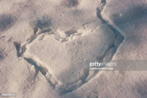 Heart in snow in Germany created by creature footprints