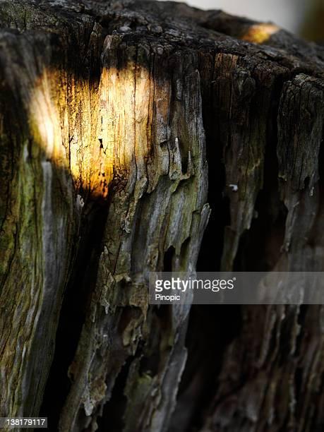 Au feu de signalisation sur Tronc d'arbre