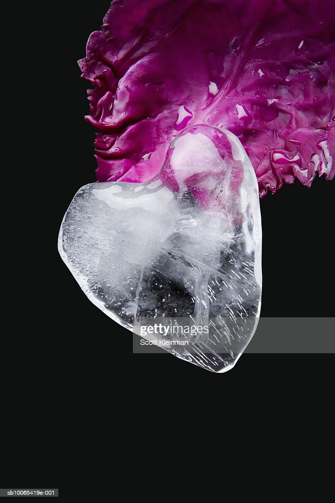 Heart made of ice and red cabbage leaf : Foto stock