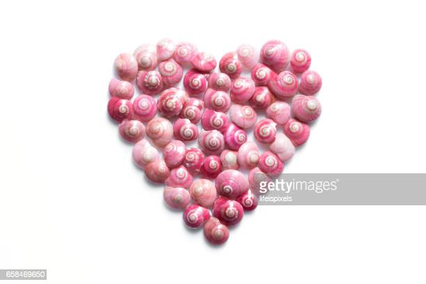 heart made of pink shells on white background - lifeispixels stock pictures, royalty-free photos & images