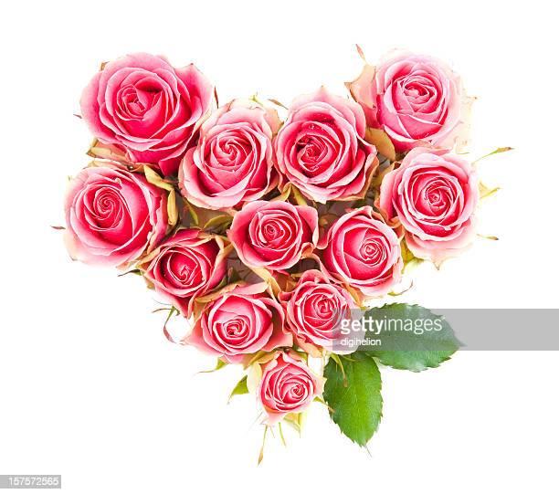 Coração de Magenta Rosa Flores