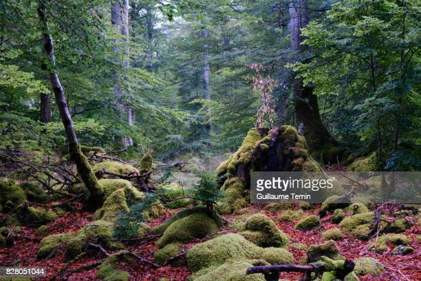 heart of the forest - auvergne rhône alpes stock pictures, royalty-free photos & images
