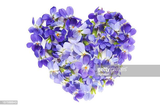 Heart of Violet Flowers on white background