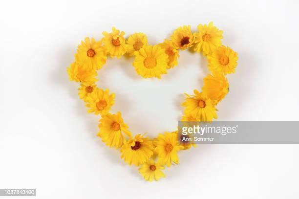 Heart of yellow flowers, Marigolds (Calendula officinalis), cutout, Germany