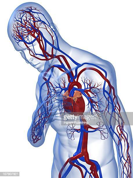 heart pain - biomedical illustration stock pictures, royalty-free photos & images