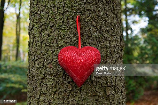 Heart pendent hanging on tree trunk