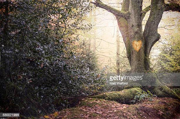 Heart shape carved into old tree in misty forest