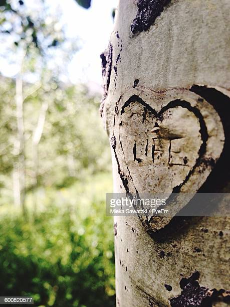 Heart Shape Carved On Tree Trunk