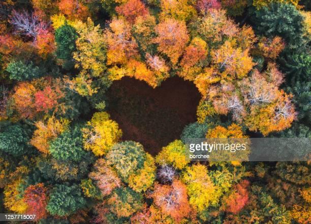 hjärtform i höstskogen - trädområde bildbanksfoton och bilder