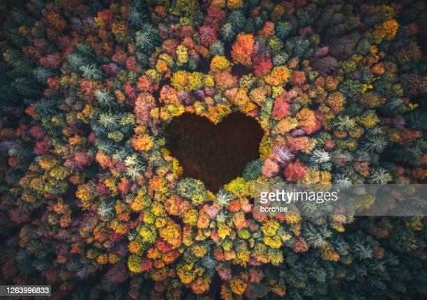 hartvorm in het bos van de herfst - schoonheid in de natuur stockfoto's en -beelden
