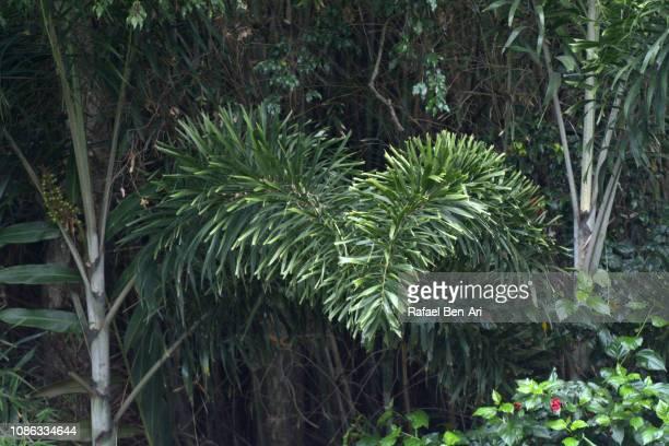 heart shape made from plants - rafael ben ari stock-fotos und bilder