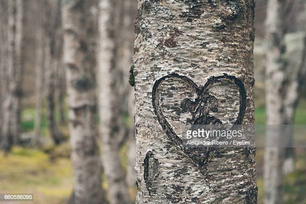 Heart Shape On Tree Trunk At Forest