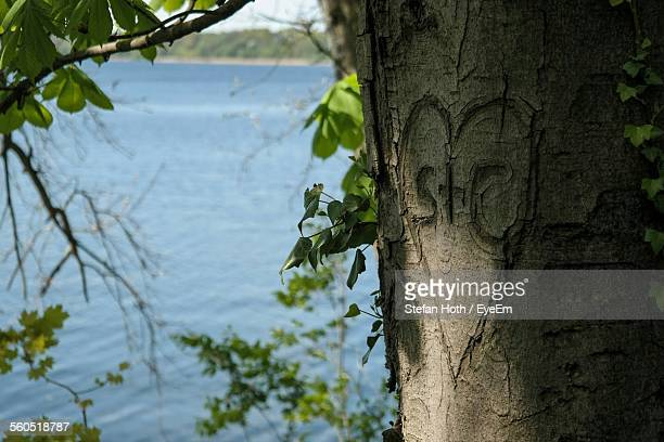 Heart Shape On Tree Trunk At Lakeshore