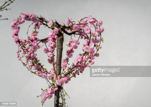 Heart shaped leaf tree stock photos and pictures getty images heart shape tree mightylinksfo