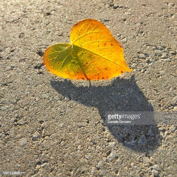Heart shaped autumn leaf with heart-shaped shadow on the sidewalk